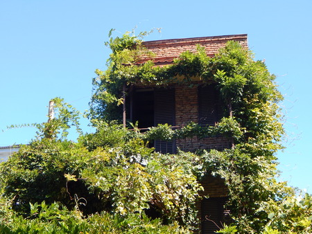 attic: Attic and creepers
