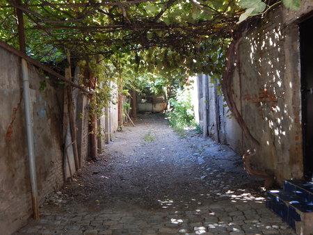 coolness: Under the vineyard