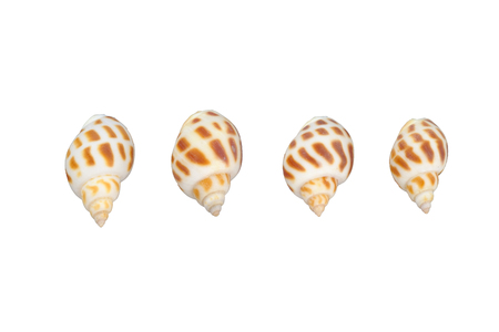 Shells isolated on white background with clipping path.