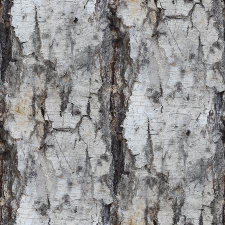 birch tree texture seamless background wallpaper