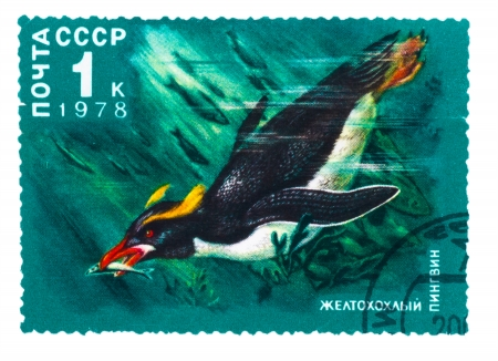 USSR - CIRCA 1978  A stamp printed by USSR, shows zheltohohly yellow penguin, circa 1978 photo