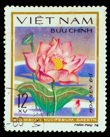VIETNAM - CIRCA 1978: A stamp printed in VIETNAM, shows Sacred lotus - Nelumbium Nuciterum Gaerth, circa 1978 photo