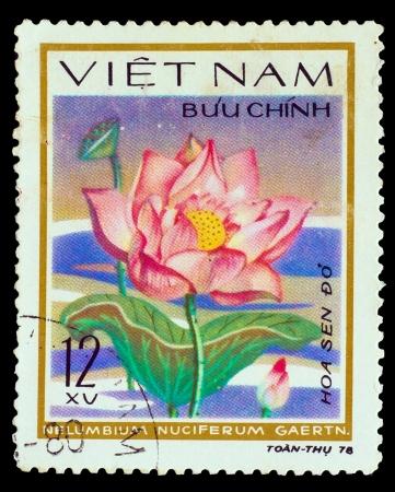 VIETNAM - CIRCA 1978: A stamp printed in VIETNAM, shows Sacred lotus - Nelumbium Nuciterum Gaerth, circa 1978