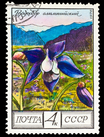 USSR - CIRCA 1976: A stamp printed in USSR, shows Aquilegia olympica, circa 1976 photo