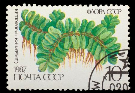 salvinia: USSR - CIRCA 1987: A stamp printed in USSR shows Salvinia floating, aquarium plant , circa 1987