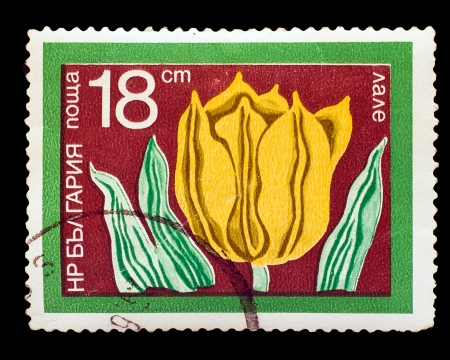 BULGARIA-CIRCA 1975: A stamp printed in BULGARIA, yellow Tulip (Tulipa schrenkii), circa 1975 photo