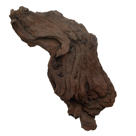 piece brown old tree isolated (clipping path) photo