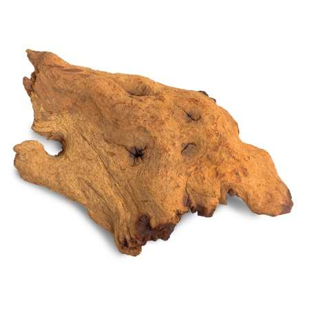 brown piece of an old tree isolated on white background photo