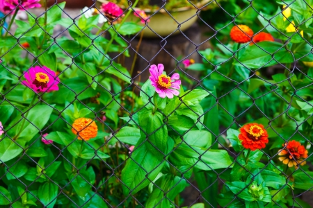 flower garden and a fence with barbed wire background photo