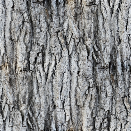 seamless texture white tree bark wallpaper gray background your photo