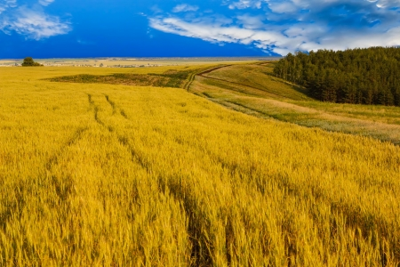 wheat field sky landscape summer nature sunset tree sun farm agriculture rural yellow photo