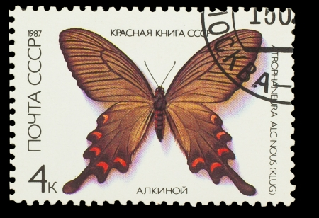 USSR - CIRCA 1987: A stamp printed in USSR, shows Butterfly Atrophaneura Alcinous , from series Red Book USSR, circa 1987 photo