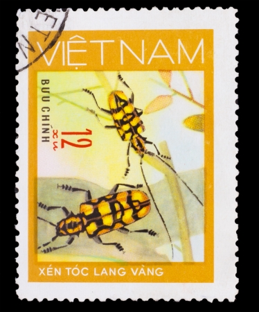 horn beetle: VIETNAM - CIRCA 1981: A stamp printed in VIETNAM, shows animal insect long horn beetle bug, 12 coins, circa 1981