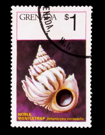 GRENADA - CIRCA 1978: A Stamp printed in GRENADA, sea shell noble, inscription 'stheno rytis pernobilis, noble wentletrap' , circa 1978 photo