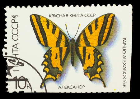USSR - CIRCA 1987: A stamp printed in USSR, shows Butterfly Papilio alexanor , from series Red Book USSR, circa 1987 photo