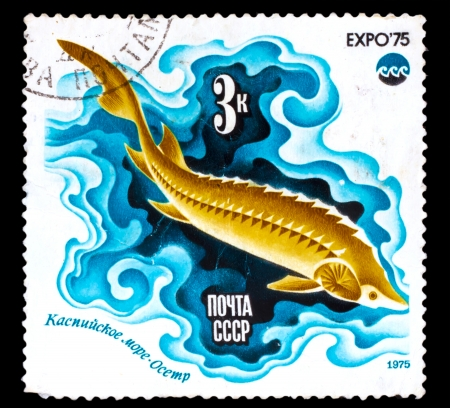 limnetic: USSR - CIRCA 1975: A Stamp printed in USSR, shows fish Sturgeon, Caspian Sea from series Oceanexpo 75 Emblem, circa 1975