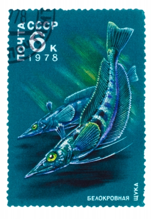USSR - CIRCA 1978: A stamp printed by USSR, shows white-blooded pikes, circa 1978 photo