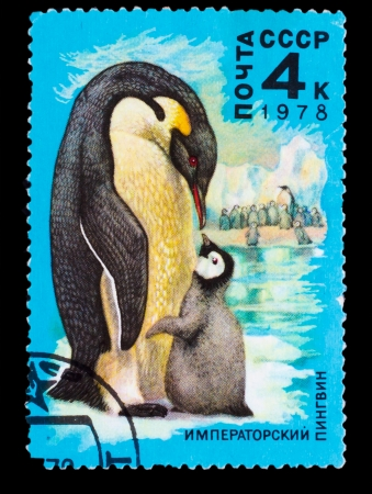USSR - CIRCA 1978: A Stamp printed in USSR, shows image of emperor penguin , circa 1978 photo