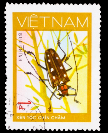long horn beetle: VIETNAM - CIRCA 1981: A stamp printed in VIETNAM, shows animal insect long horn beetle bug, 1 coins, circa 1981 Stock Photo
