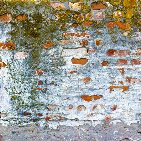 texture brick wall with mold photo