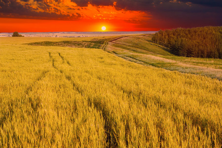 field and sky: Wheat field sky landscape summer nature sunset