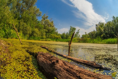 snag: duckweed swamp forest  snag sky Russian landscape Stock Photo