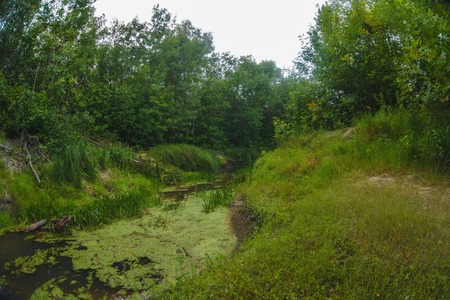 impenetrable: landscape wild swamp in the impenetrable forest river shallow sand and grass landscape nature Russia