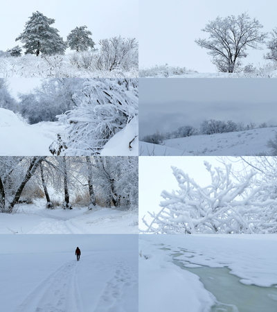 snow forest: set  forest winter landscape nature christmas tree winter snow Stock Photo
