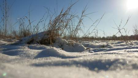 sways: dry grass sways in wind winter snow nature landscape field steppe