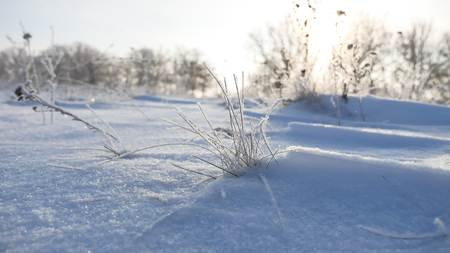 sways: frozen sunlight grass nature sways in the wind in the winter snow falls beautiful sun glare