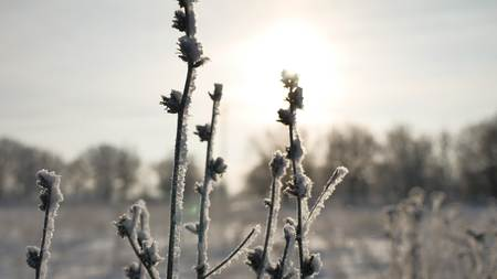 sways: frozen sunlight grass sways in the wind in the winter snow falls nature beautiful sun glare