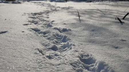 dint: human nature footprints in the snow winter landscape path lot of snow Stock Photo