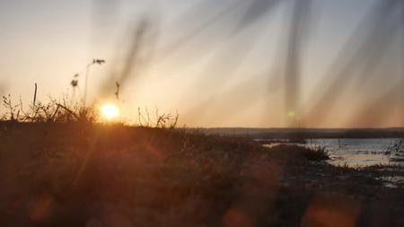 swaying: nature sunset. Sea waves, river grass swaying in the wind on a beautiful sunset silhouette nature