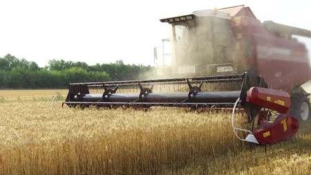 kombinieren Ernten Weizen Landwirtschaft. Landwirtschaft, die Mähdrescher erntet. Steadicam-Videoaufnahme