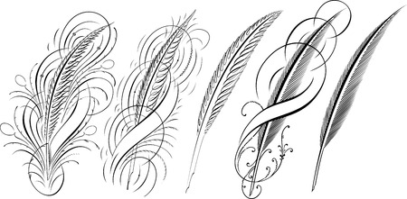 クイルズ、カリグラフィのデザイン要素のセット  イラスト・ベクター素材