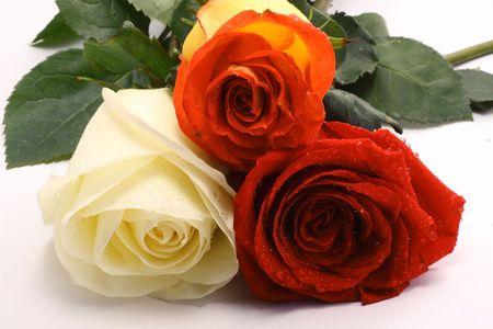 Three roses Stock Photo - 3027832