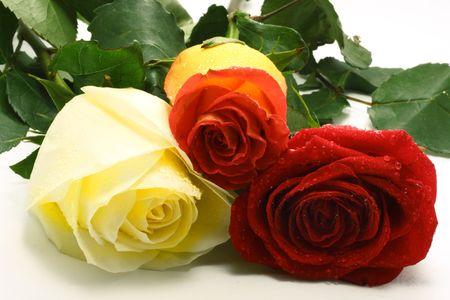 Three roses Stock Photo - 3027837