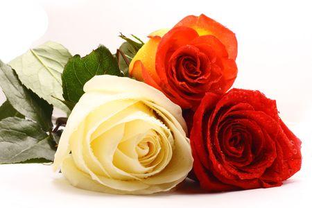 Three roses Stock Photo - 3292330