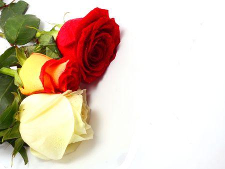 Three roses Stock Photo - 3319169