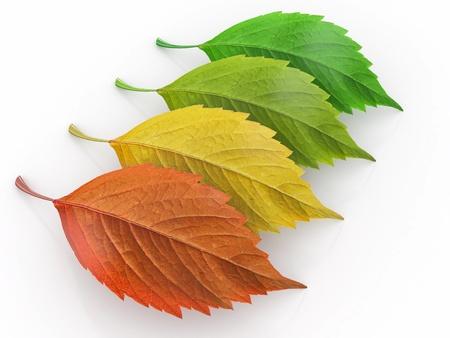 cuatro elementos: Cuatro temporada verde, rojo y yeloow hoja de 3d