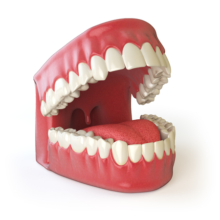 dentin: Teeth or dentures isolated on white. Open human mouth upper and lower jaw. 3d illustration