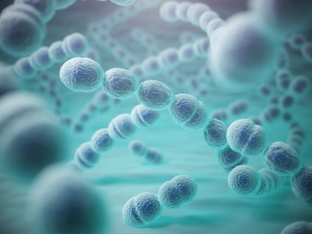 streptococcus: Streptococcus pneumoniae or pneumococcus bacterias. 3d illustration