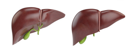 Healthy human liver with gallbladder isolated on white background. 3d illustration Stock Photo