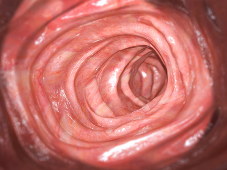 Colonoscopy. Inside of healthy colon, large intestine.