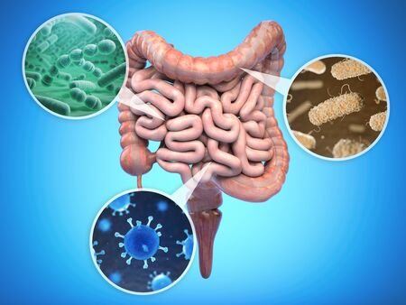 Bacteria of human intestine, Intestinal flora gut health concept.