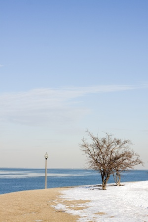 Alone Tree photo