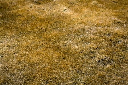 Dry Grass Imagens