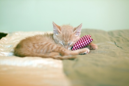 red pillows: Sleeping Kitty with pillow