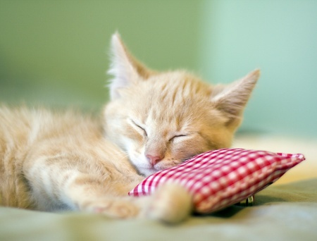 Sleeping Kitty with pillow Stock Photo - 10985517