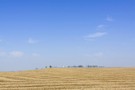 iowa agriculture: Yellow field on summer day in american country